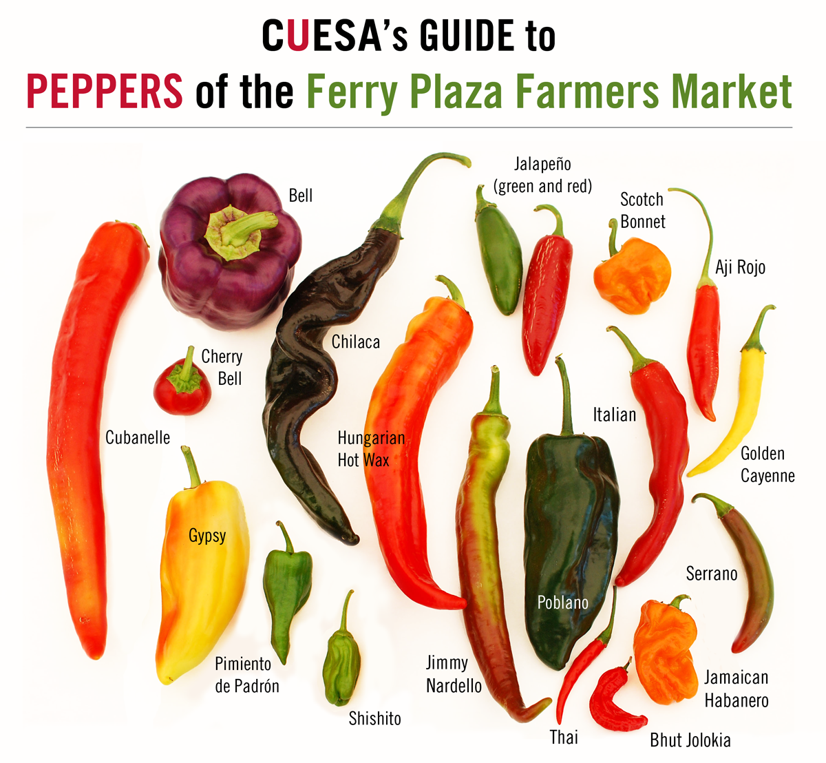 CUESA Guide to Peppers of the Ferry Plaza Farmers Market