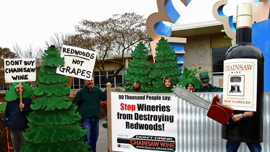 Environmental groups are fighting to stop the leveling of 154 acres of coastal redwoods and Douglas firs to make way for grapevines. Photo: Courtesy Friends of the Gualala River