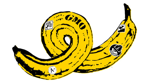GMO Banana Illustration by Daniel Horowitz for NPR