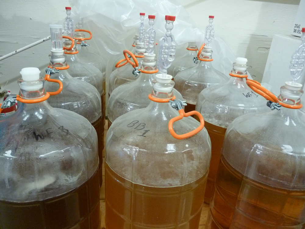 Carboys of Mead (experimental projects). Photo: Stephanie Rosenbaum