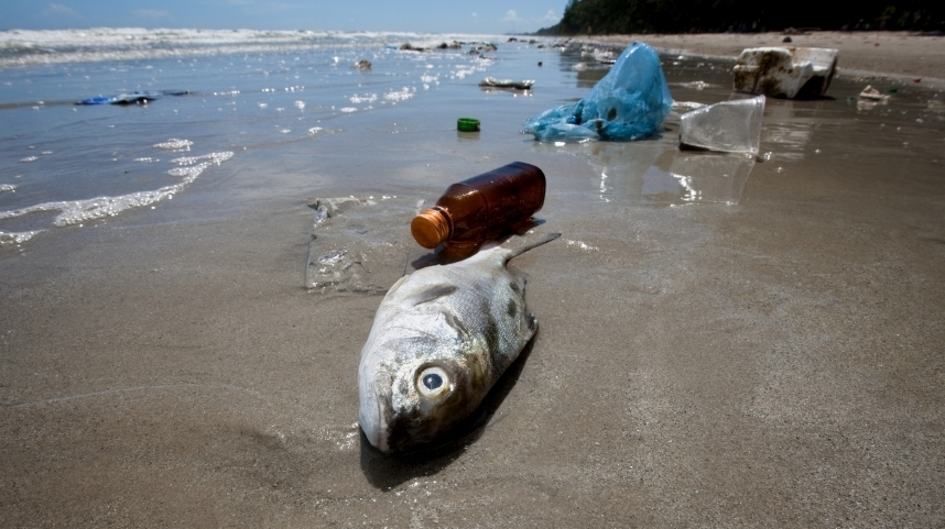 """A lot of people are eating seafood all the time, and fish are eating plastic all the time, so I think that's a problem,"" a marine toxicologist says. Photo: iStockphoto.com"