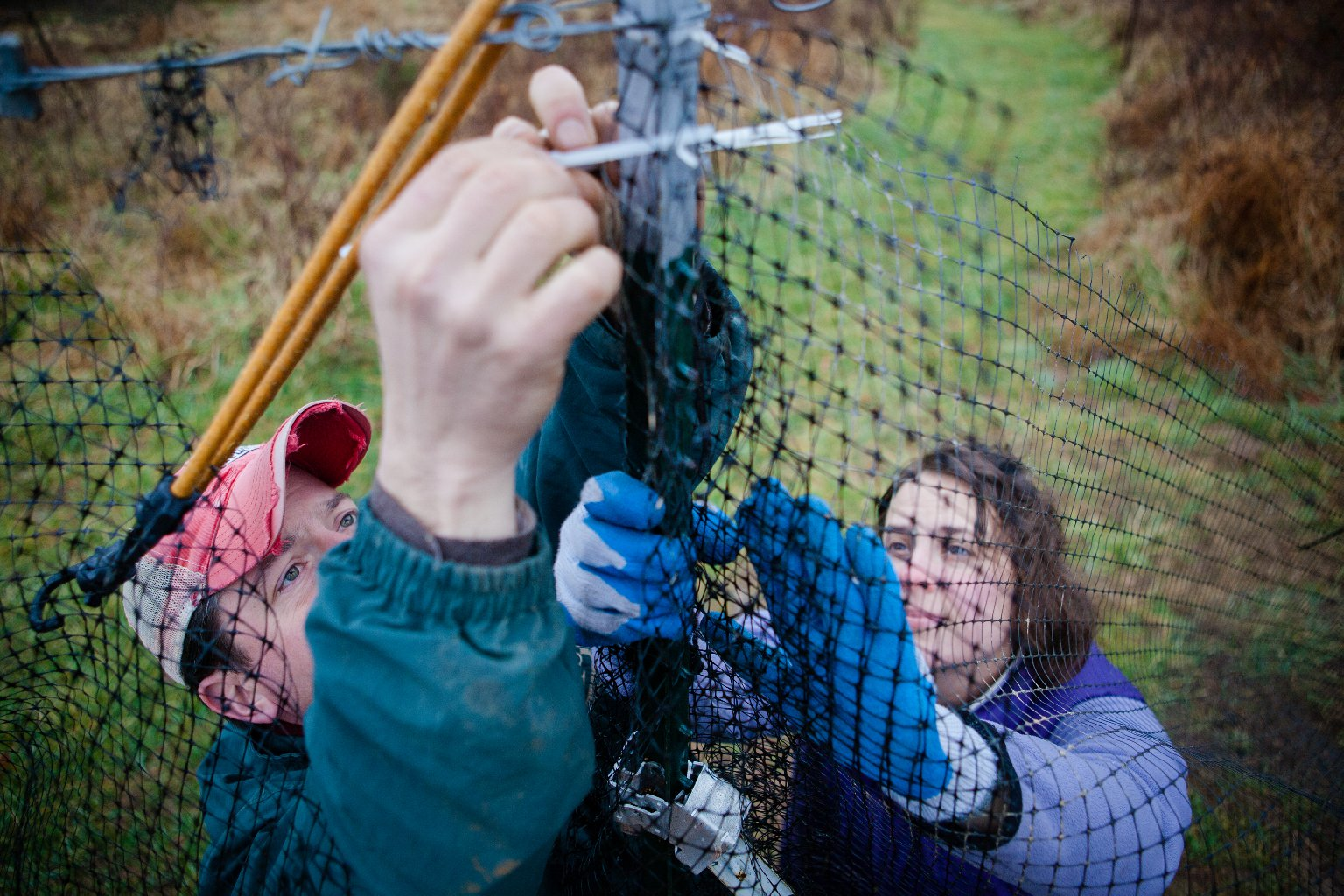 Chris and Sara work together to repair a section of fence that protects the crops from deer. Photo: Zac Visco for NPR