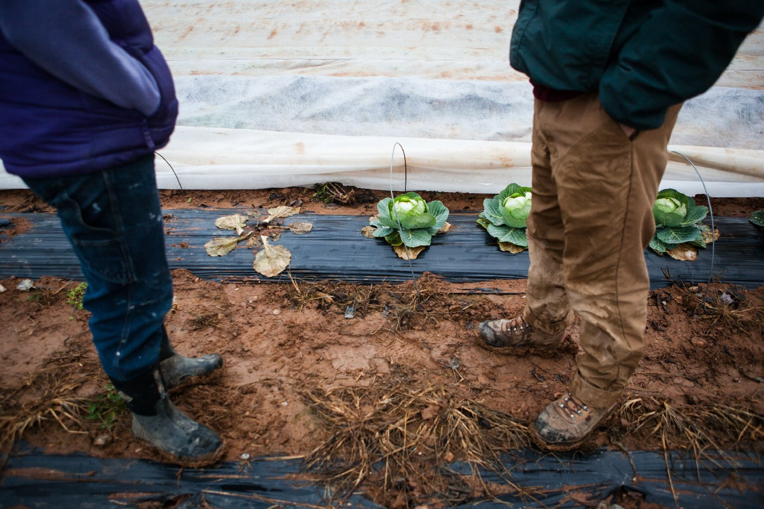 The Guerres grow and harvest crops every week of the year at the Maple Avenue Market Farm. Photo: Zac Visco for NPR