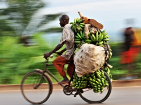 A banana seller makes his way to the market in Burundi's capital, Bujumbura. The small country in eastern Africa ranked last in terms of malnutrition in children. Photo: Roberto Schmidt/AFP/Getty Images