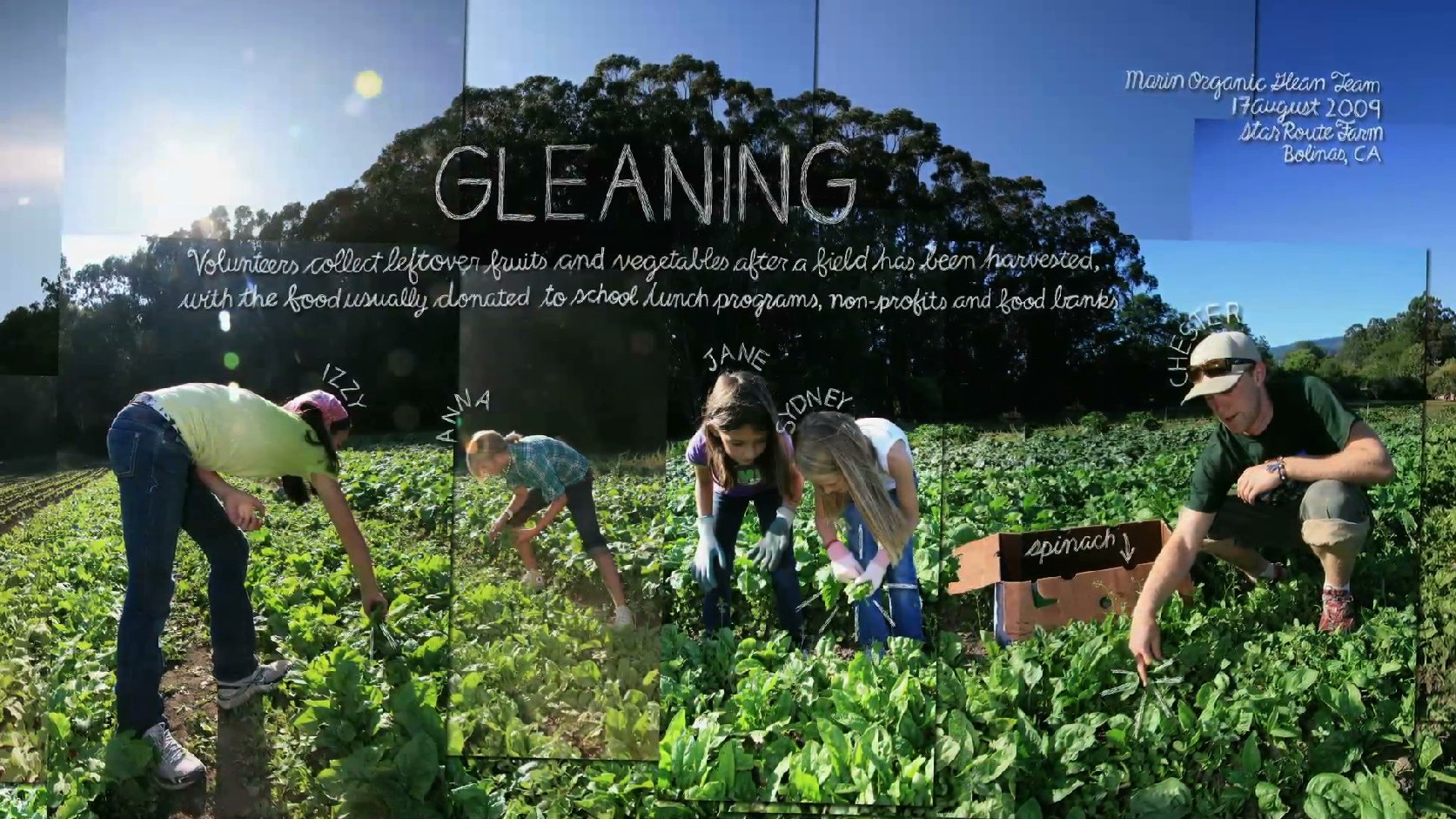 Organic Gleaning Team