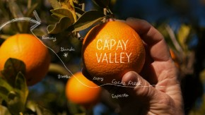 Capay Valley