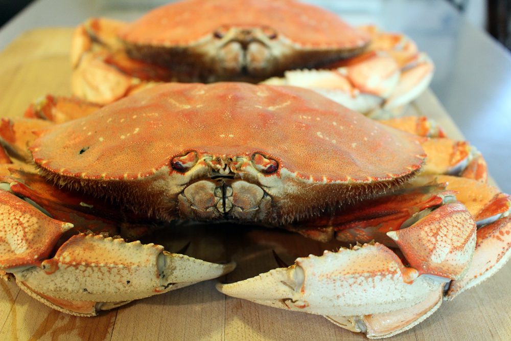 Cooked whole Dungeness crab. Photo: Wendy Goodfriend
