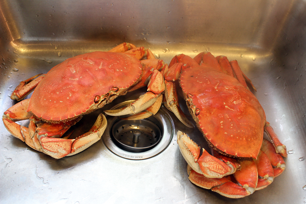 Once crabs are cooked, cool them in a sink or colander under cold running water. Photo: Wendy Goodfriend