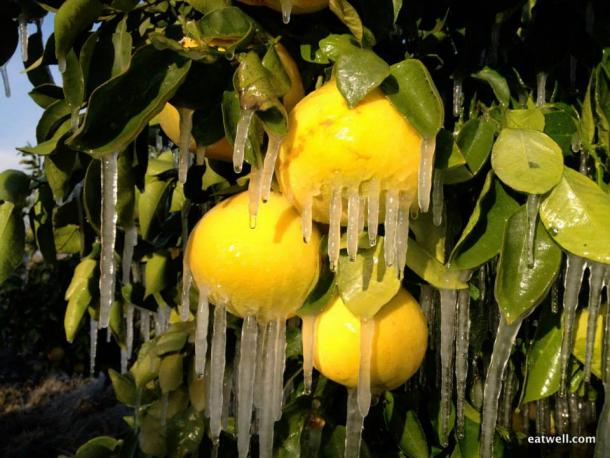 Icy citrus photo by Eatwell Farm