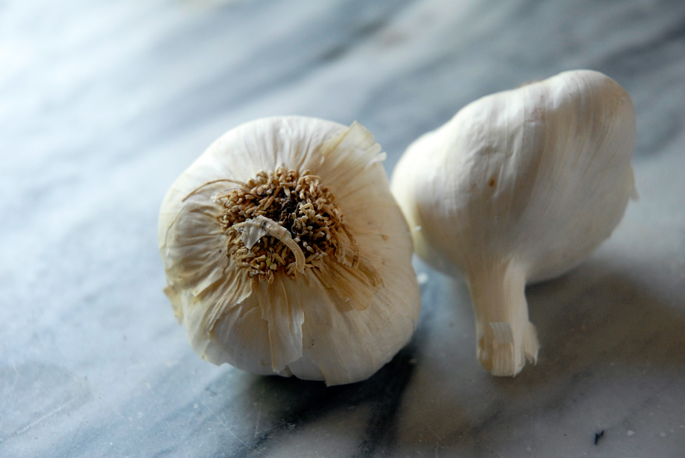 Heads of Garlic. Photo: Wendy Goodfriend