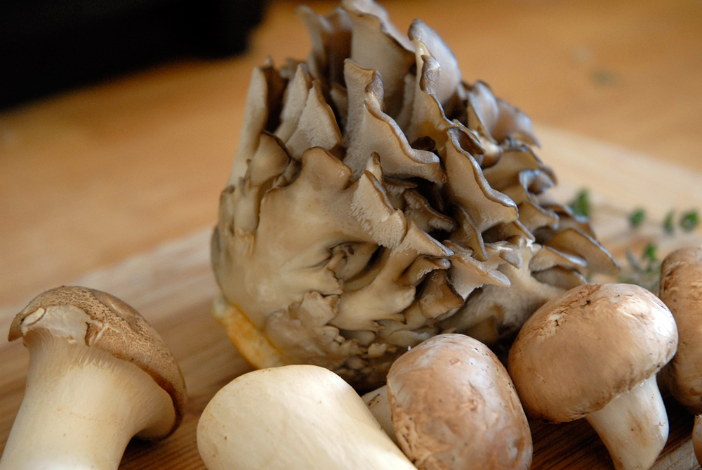 Maitake mushroom surrounded by Trumpet and button mushrooms. Photo: Wendy Goodfriend