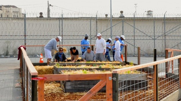 Prisoners build an organic vegetable garden in the prison yard of the medium security unit at San Quentin State Prison in December. Kirk Crippens/Insight Garden Program