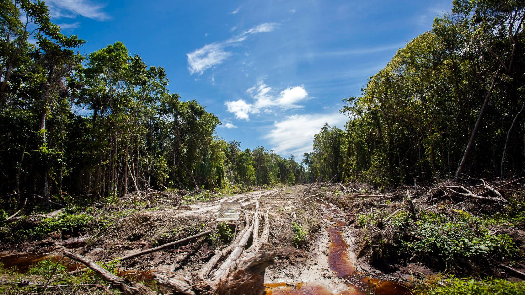 An access road is constructed in a peatland forest being cleared for a palm oil plantation on Indonesia's Sumatra island in 2013. Photo: Chaideer Mahyuddin/AFP/Getty Images