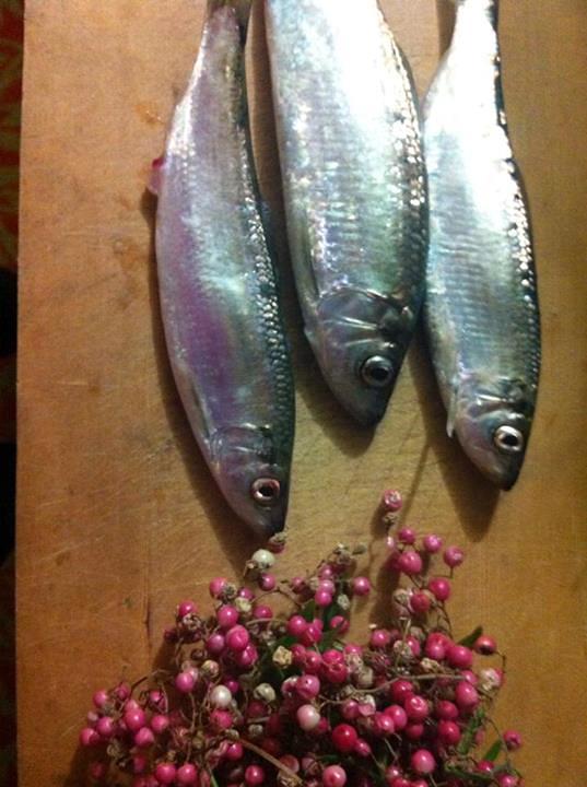 Fresh herring with pink peppercorns. Photo by Maria Finn