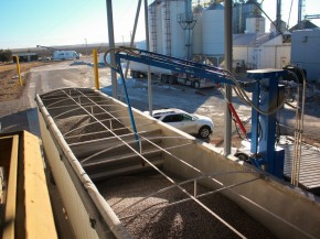 A robotic arm at Clarkson Grain takes a sample of blue corn to be tested for GMOs. Photo: Dan Charles/NPR