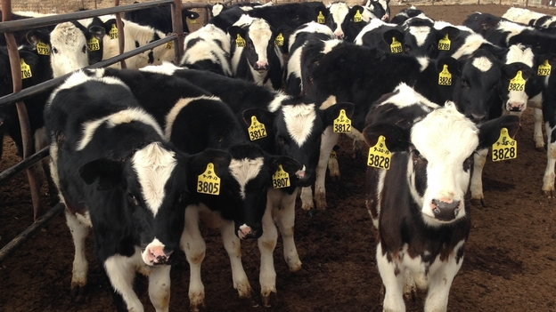 Drought Could Dry Up Nevada Dairy Farmers' Expansion Plans