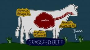 """Screenshot from """"Grass Fed video"""""""