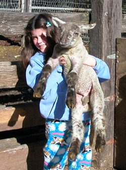 Child holding up a Devil's Gulch Ranch lamb. Photo courtesy of Devil's Gulch Ranch