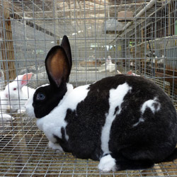 Rabbits at Devil's Gulch Ranch. Photo courtesy of Devil's Gulch Ranch
