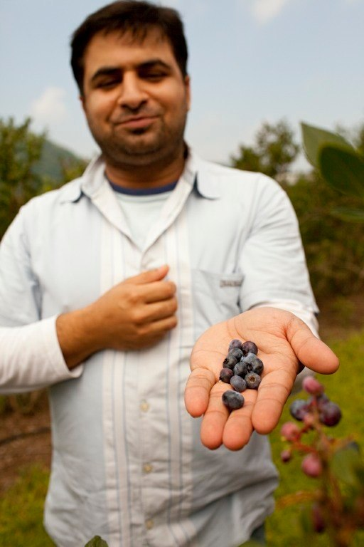 Saran shows off berries at his farm. Photo: Ben Fink