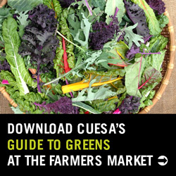 Download CUESA's guide to Greens at the Farmers' Market