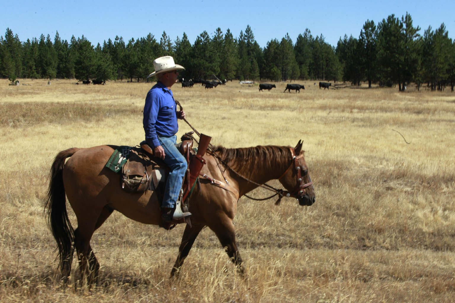 Rancher Denny Johnson, looks over his cattle in Joseph, Ore., in 2011. Conservationists say ranchers raising beef cattle are responsible for the decline of some wildlife. Photo: Rick Bowmer/ASSOCIATED PRESS