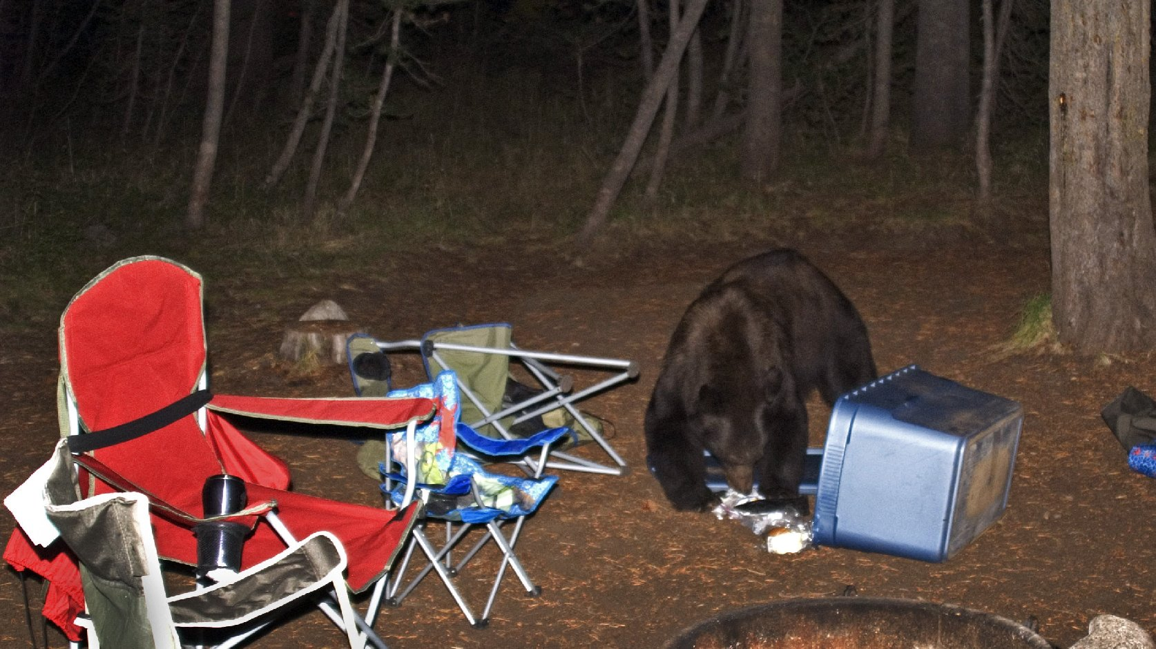 Not as cute as Yogi's pic-a-nic thievery: Food left out at a campsite in Yosemite National Park is likely to attract bears like this one, seen scavenging at Tuolumne Meadows Campground in 2008. Photo: Courtesy of Erica Crawford