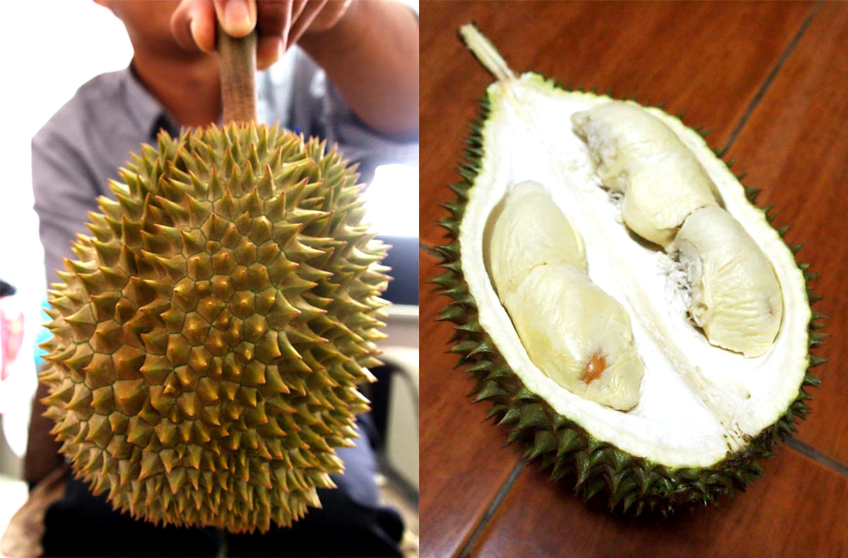 The Longlaplae is a milder tasting durian with almost no aroma. Photo: Courtesy of Lindsay Gasik