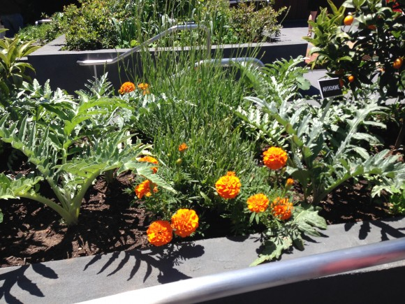 An edible garden is the latest attraction at the Giants ballpark.