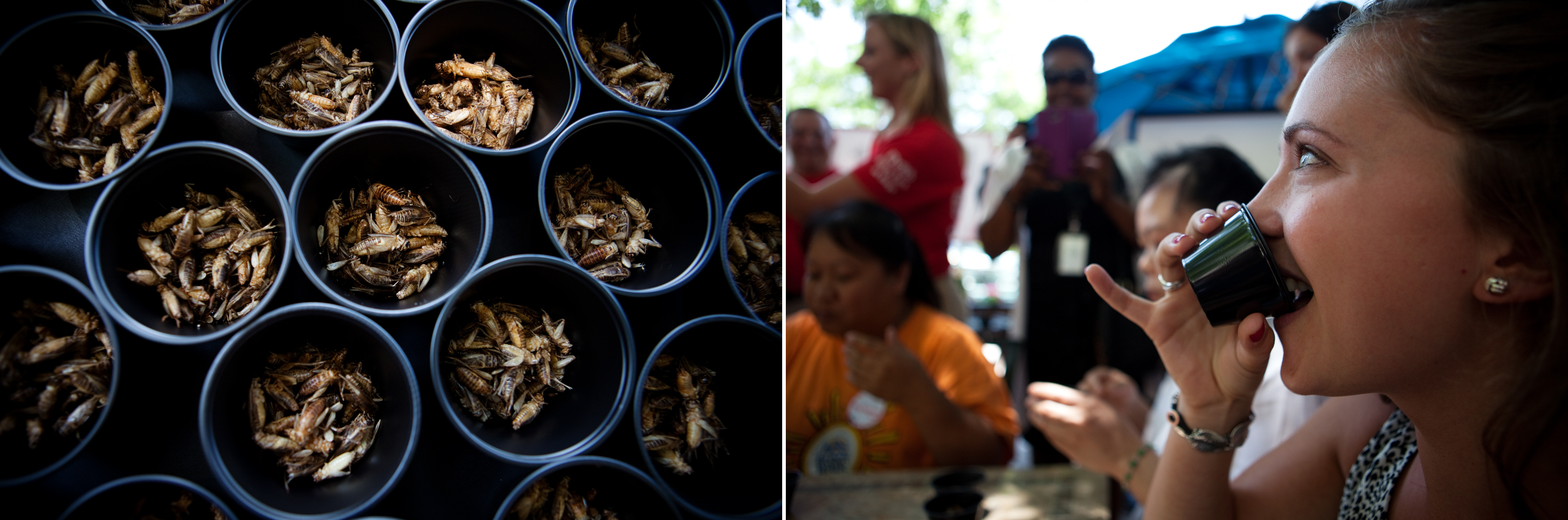 Katherine Eklund, with D.C Central Kitchen, competes in a cricket eating competition. Photo: Maggie Starbard/NPR