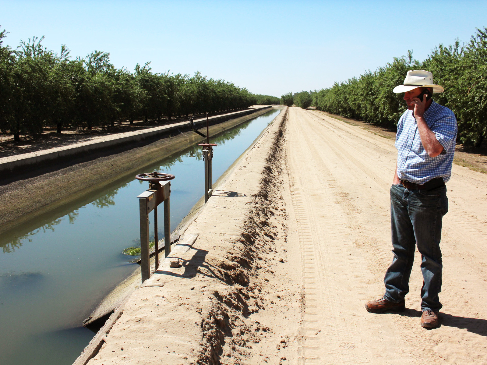 Allen Peterson's farm, near the city of Turlock, Calif., lies next to a concrete-lined canal full of water. He's one of the lucky ones. Photo: Dan Charles/NPR