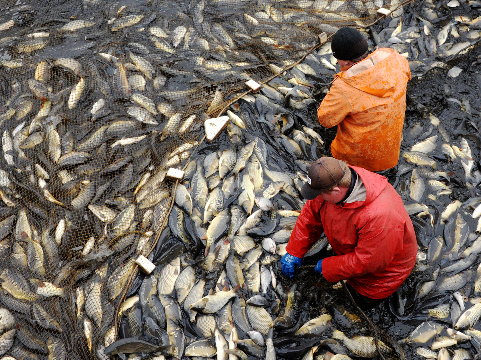 Can Farmed Fish Feed The World Without Destroying The Environment?