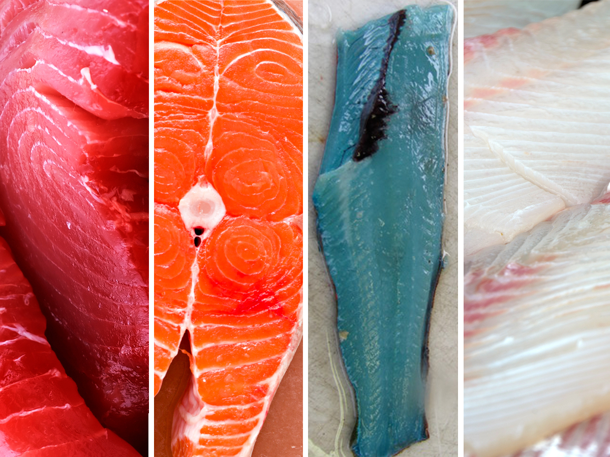 Chang/iStockphoto; Debbi Smirnoff/iStockphoto; Yellowfin tuna; Chinook salmon; lingcod; Pacific halibut. Photos via TeachAGirlToFish; Andrea Pokrzywinski/Flickr