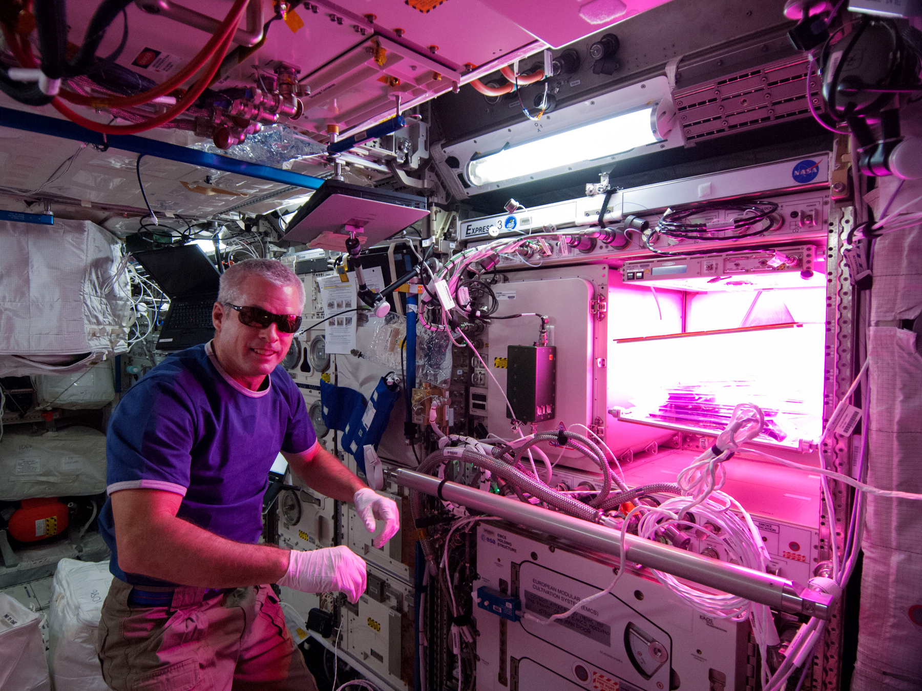 "Astronaut Steve ""Swanny"" Swanson tends to lettuce plants growing at the International Space Station that may one day make it into his salad. Photo: Courtesy of NASA"