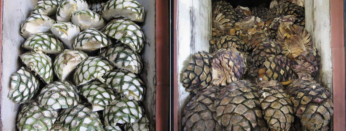 Piñas are piled into the ovens at La Alteña Distillery in the highlands of Jalisco, before (left) and after being roasted, and before their juice has been fermented and distilled into tequila. Photo: Kitchen Sisters for NPR