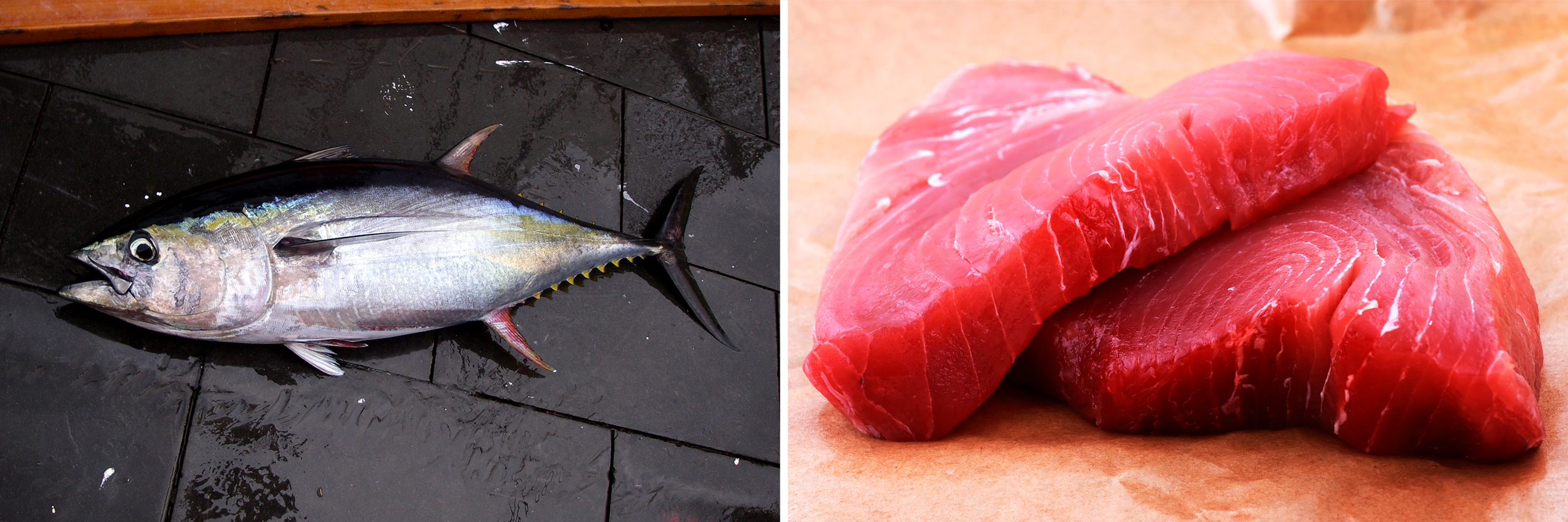 A yellowfin tuna caught in the Gulf of Mexico; a yellowfin tuna steak. Photos: NOAA/Flickr;Chang/iStockphoto
