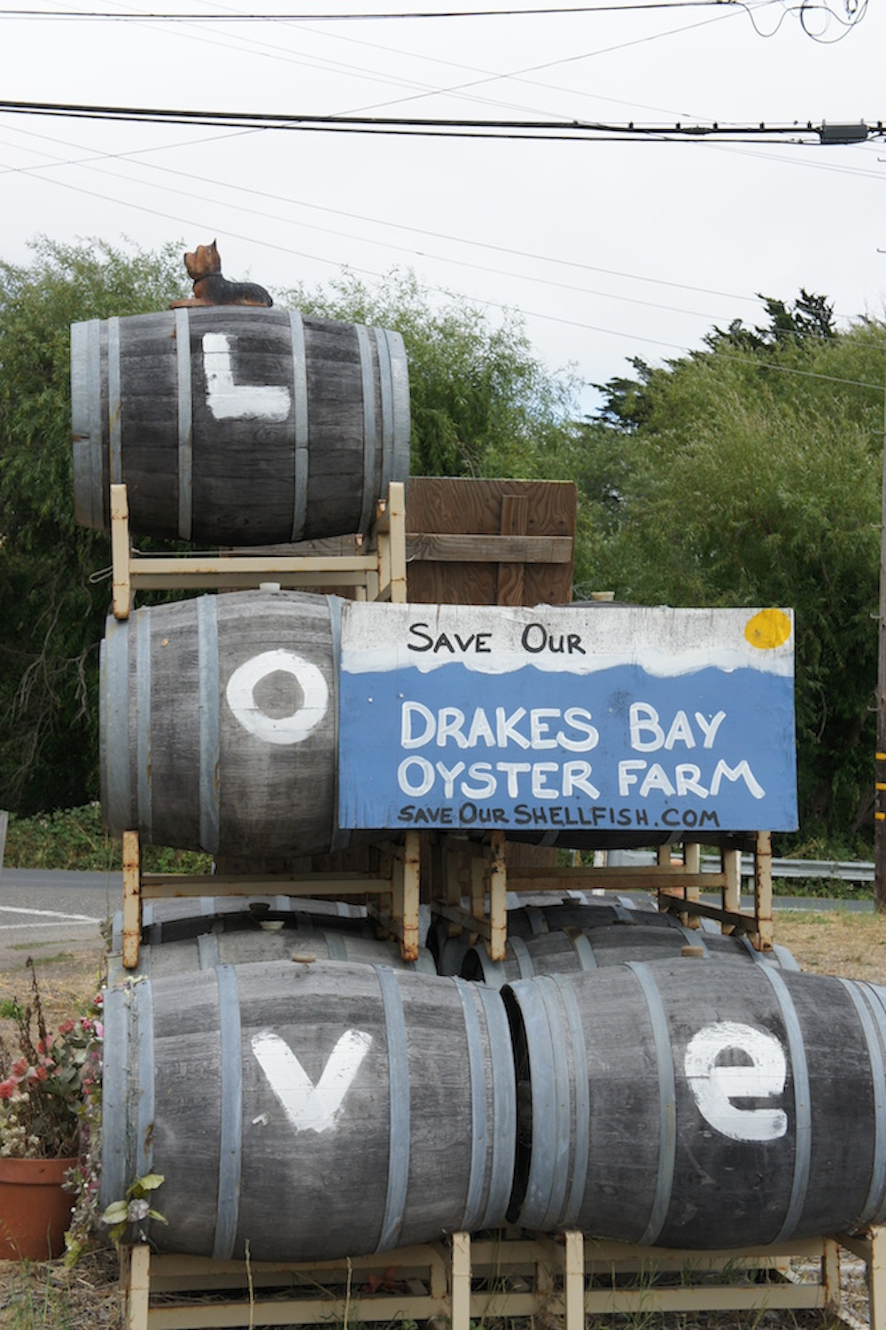 A Save Drakes Bay sign near Point Reyes Station. The Lunny's and the community have been involved in a long legal battle to keep the farm open. Photo: Angela Johnston
