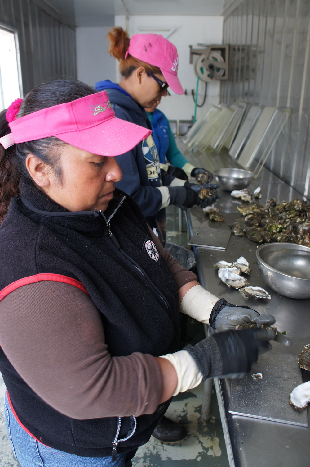Lorena Pablo shucks oysters in a shipping container behind the farm. Photo: Angela Johnston