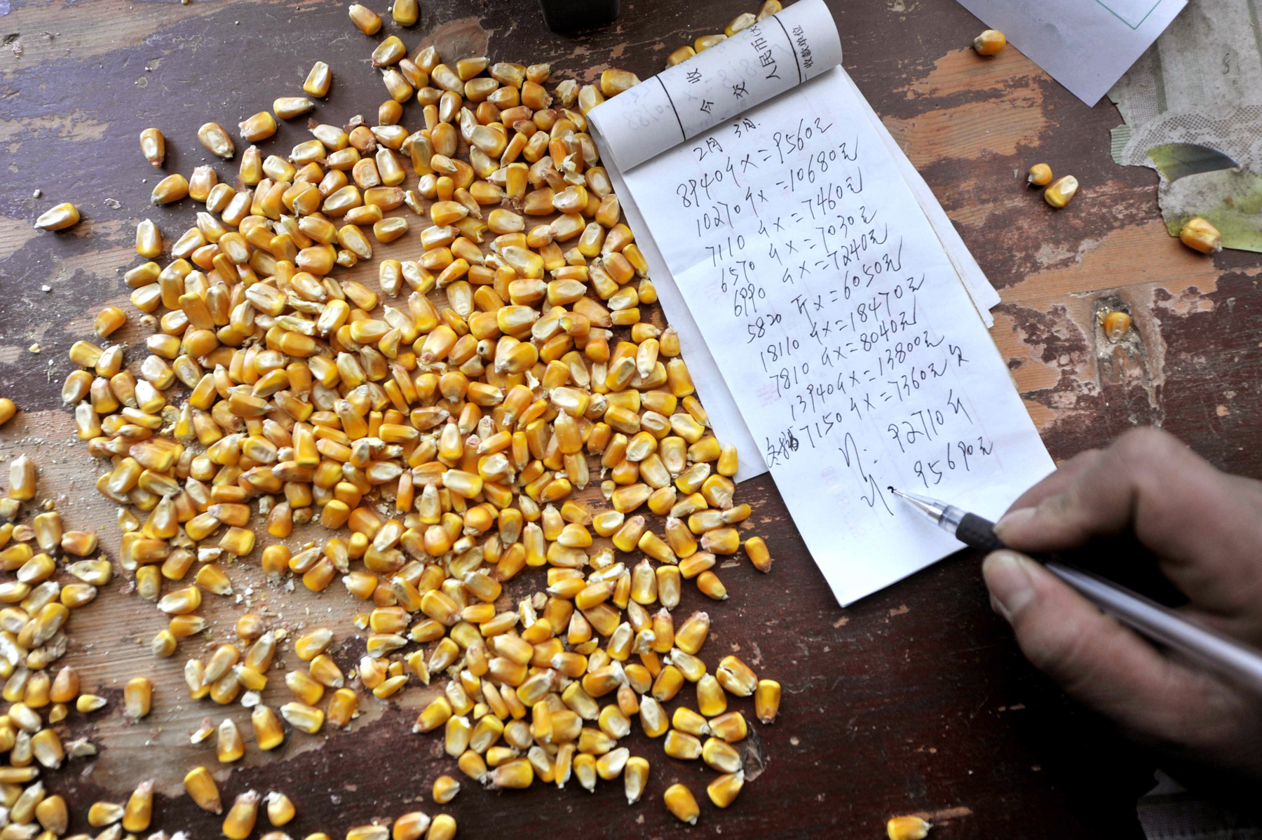 A corn purchaser writes on his account in northwest China in 2012. In November 2013, officials began rejecting imports of U.S. corn when they detected traces of a new gene not yet approved in China. Photo: Peng Zhaozhi/Xinhua/Landov