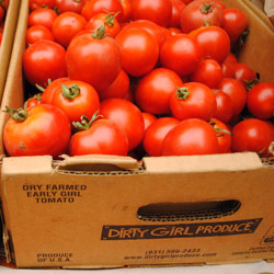 Early Girl tomatoes from Dirty Girl Produce. Photo: CUESA