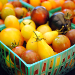 Ivory Pear tomatoes from Lucero. Photo: CUESA