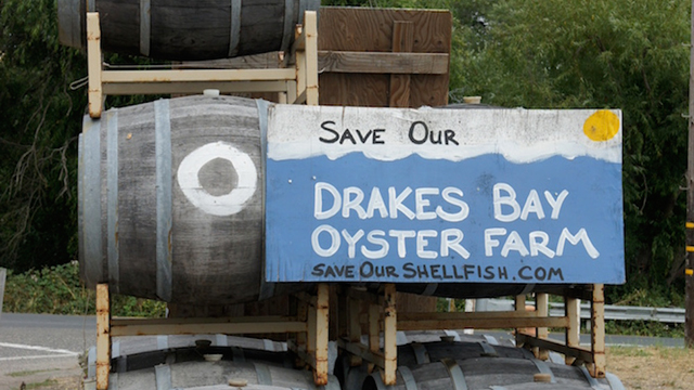 Drakes Bay Oyster Company Gets 30 More Days as Restaurants File Lawsuit to Keep Farm Going