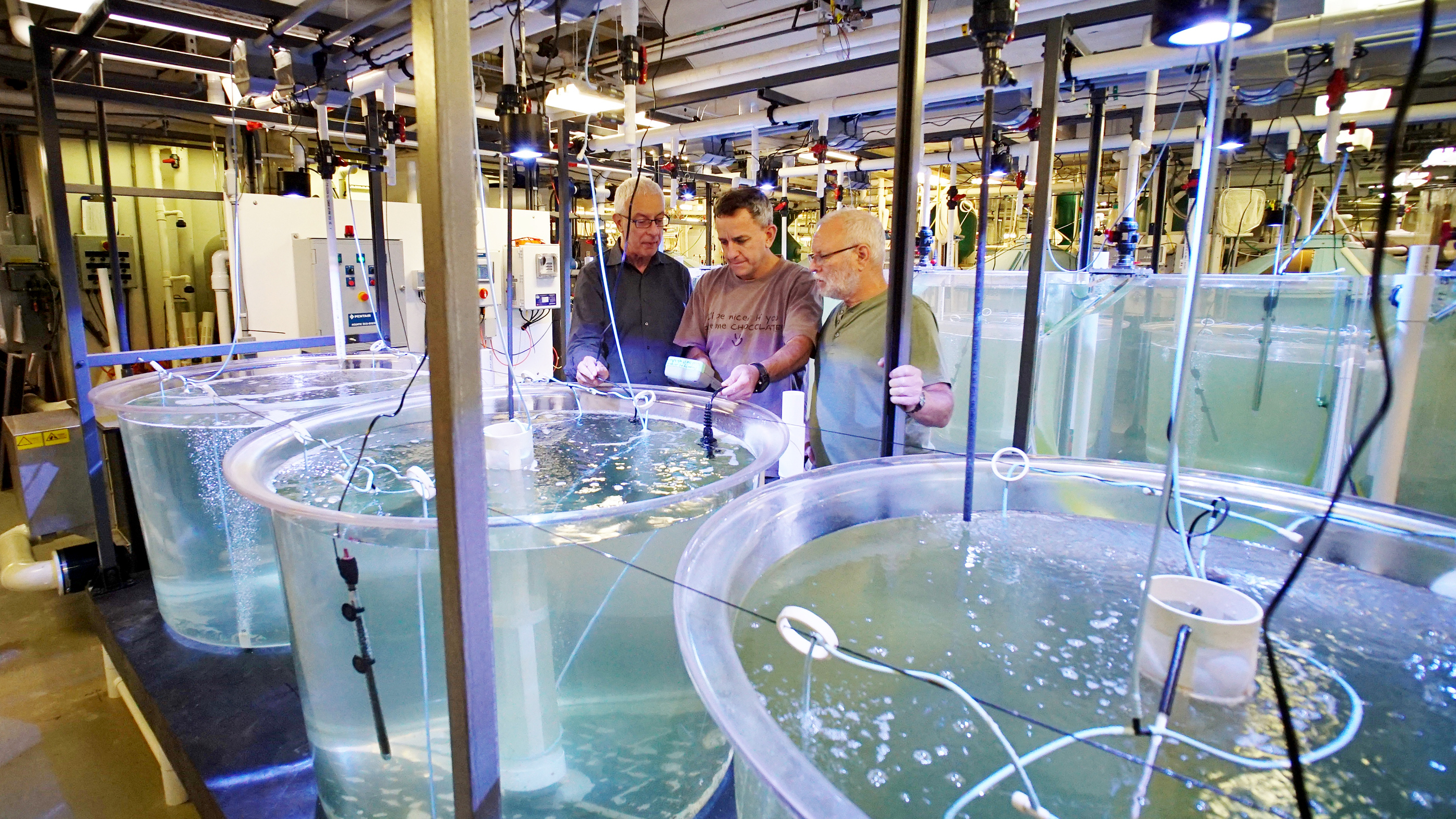 Yonathan Zohar, Jorge Gomezjurado and Odi Zmora check on bluefin tuna larvae in tanks at the University of Maryland Baltimore County's Institute of Marine and Environmental Technology. Photo: Courtesy of Yonathan Zohar