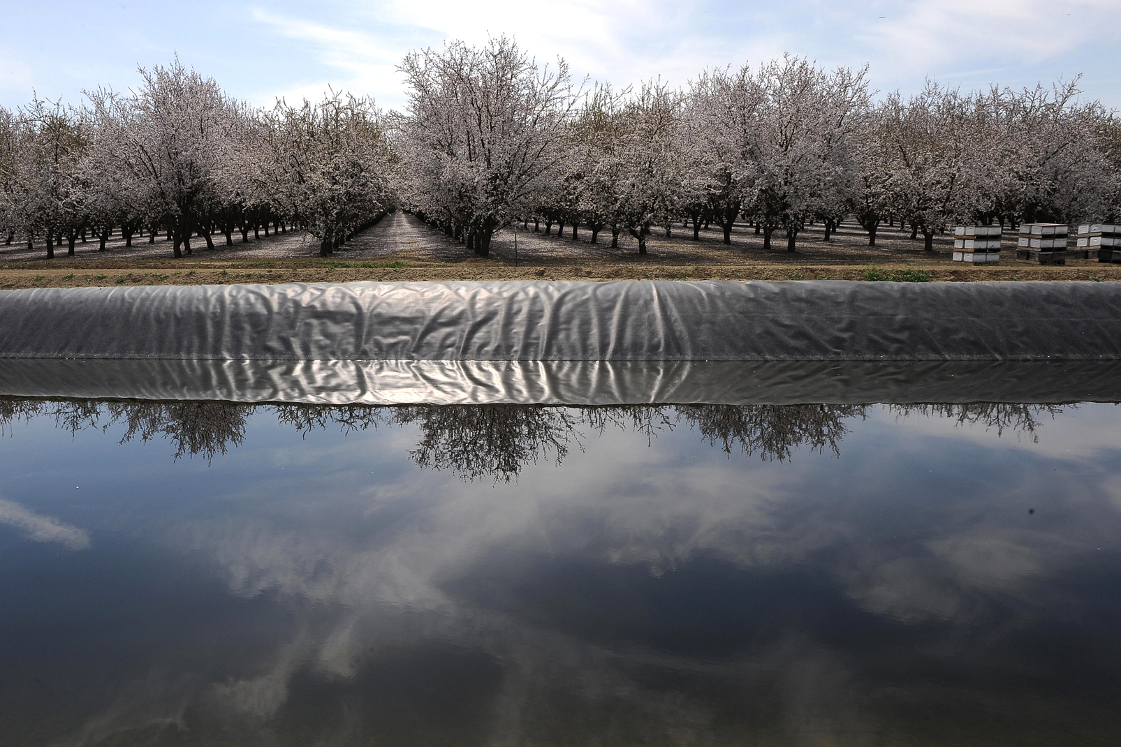 A field of almond trees is reflected in an irrigation canal in Firebaugh, Calif., in the San Joaquin Valley in 2009. The Almond Board of California says that in the past two decades, the industry has reduced its water consumption by 33 percent per pound of almonds produced. Photo: Robyn Beck/AFP/Getty Images