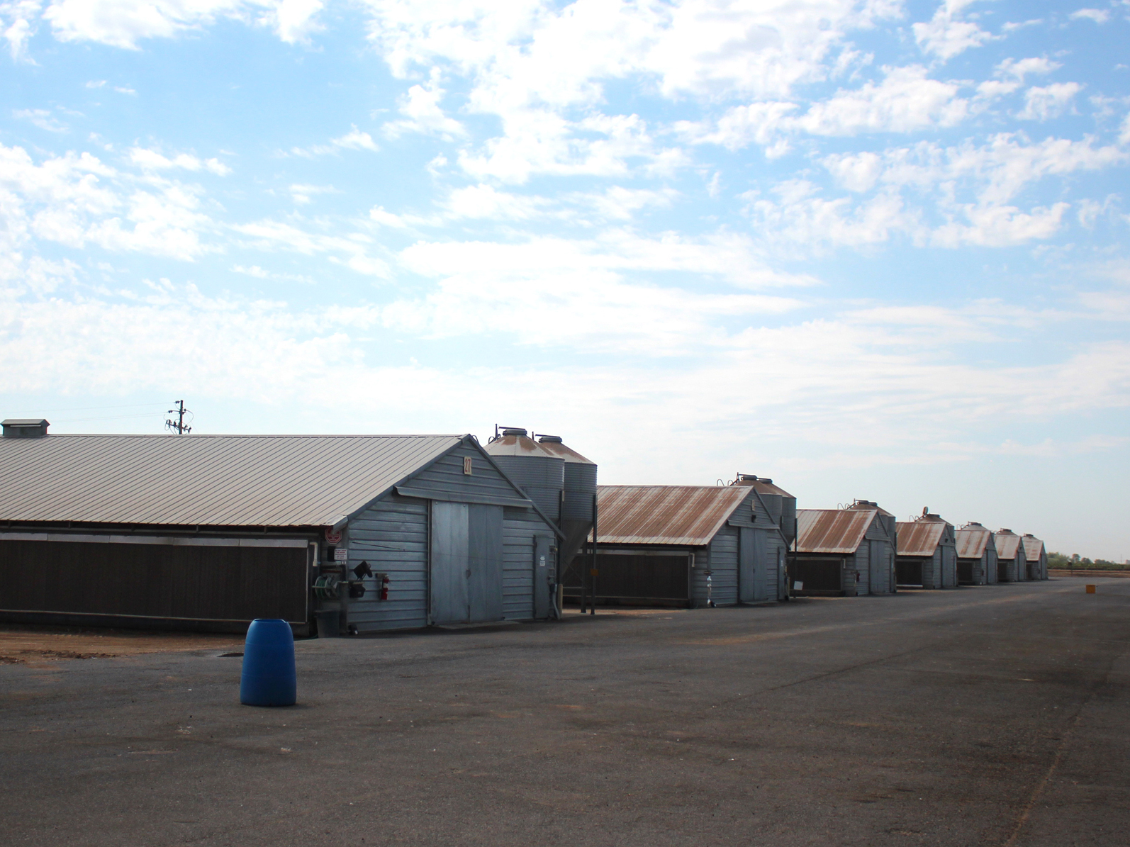 This Foster Farms ranch near Merced, Calif., had higher prevalence for salmonella, so the company started testing everywhere to find it. It turned out the contamination was concentrated inside the houses. Photo: Dan Charles/NPR