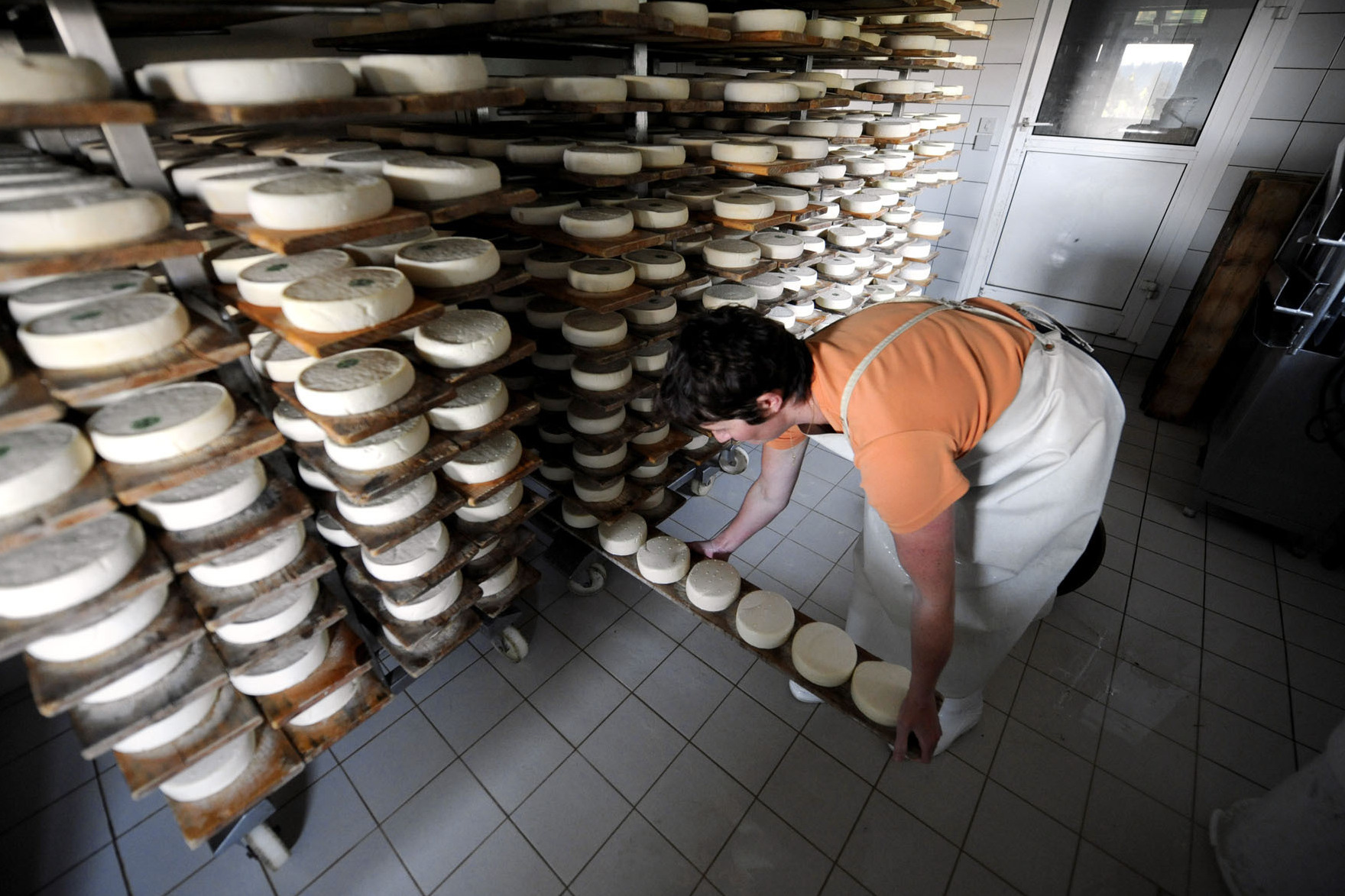 A French cheesemaker sets up wheels of Reblochon, a semi-soft cheese made from raw cow's milk, for maturing in a farm in the French Alps. Anglophone cheesemakers say translating a French government cheese manual will help them make safer raw milk cheese. Photo: Jean-Pierre Clatot/AFP/Getty Images