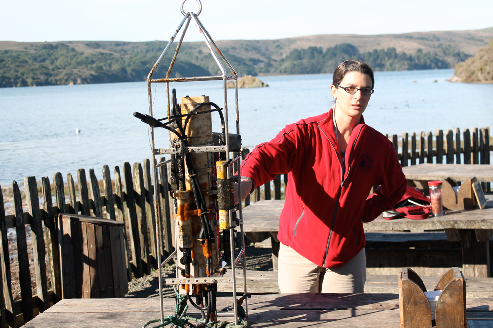 Dr. Tessa Hill from UC Davis Bodega Bay Marine Lab examining ocean acidification. Photo courtesy of Hog Island Oyster Co.