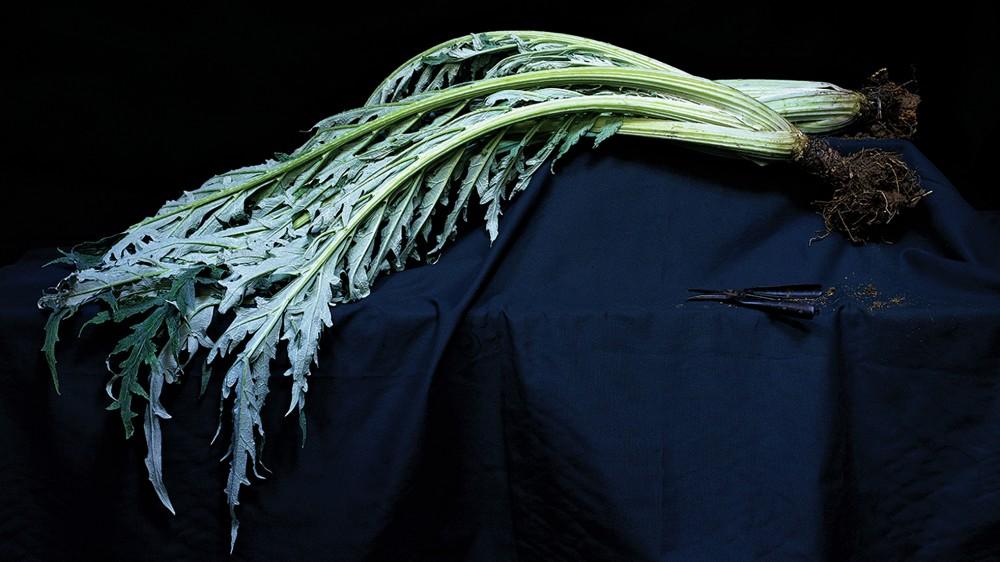 "The cardoon is like ""celery on steroids,"" says McLaglan. Photo: Aya Brackett/Ten Speed Press"
