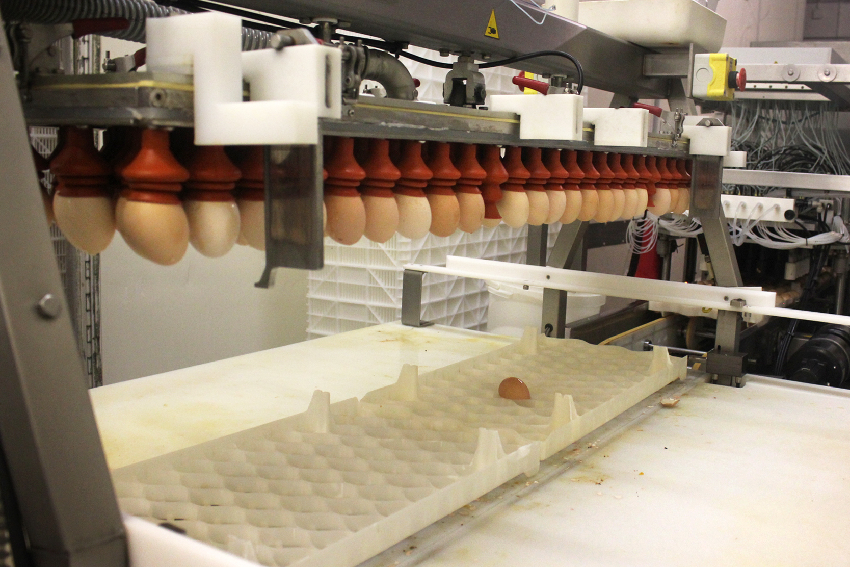 When the chicks are almost ready to hatch, they go through a vaccination robot. Photo: Dan Charles/NPR