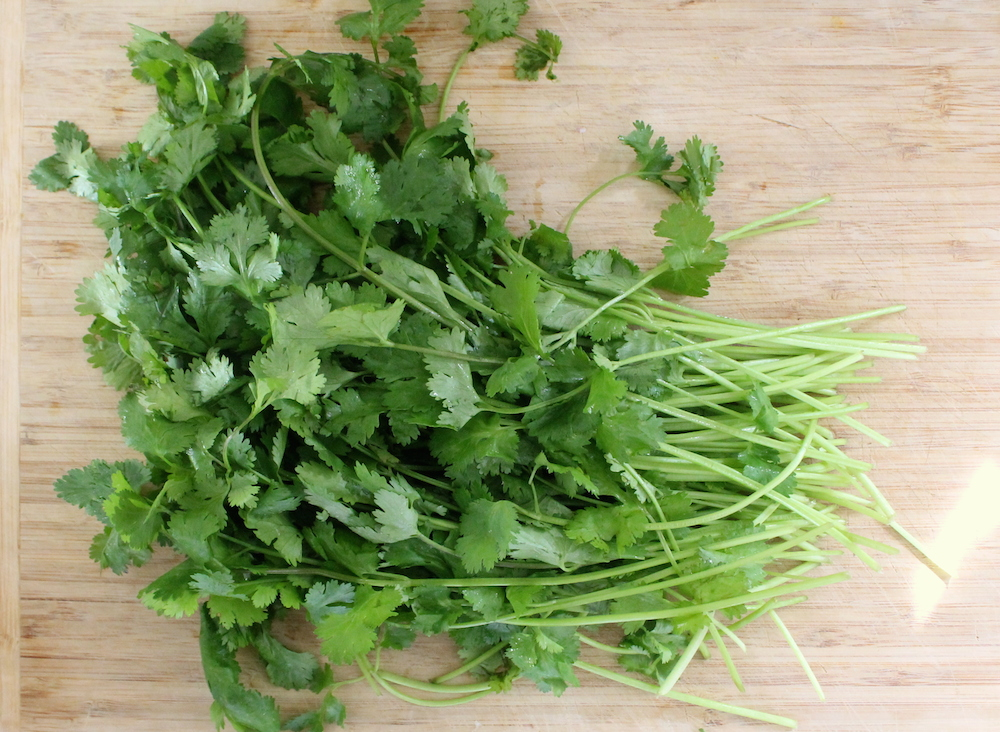 Cilantro roots are a common curry paste ingredient. The root is challenging to source (I've only seen them in my CSA). The next-best ingredient is the chopped cilantro stem. Cilantro stems are bright and fresh while roots are on the earthy side, but they'll still carry the herb's signature bite. Photo: Kate Williams